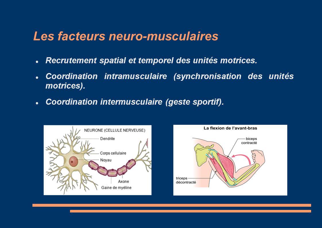 Les facteurs neuro-musculaires Recrutement spatial et temporel des unités motrices. Coordination intramusculaire (synchronisation des unités motrices)