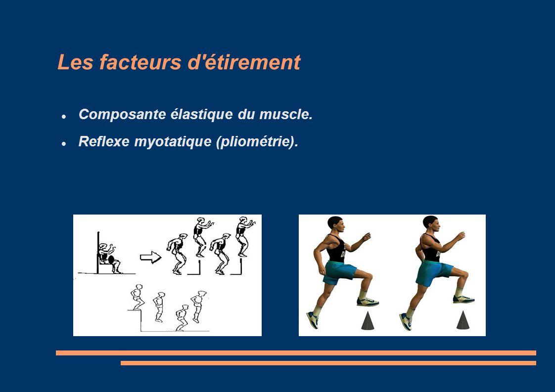 Les facteurs d'étirement Composante élastique du muscle. Reflexe myotatique (pliométrie).