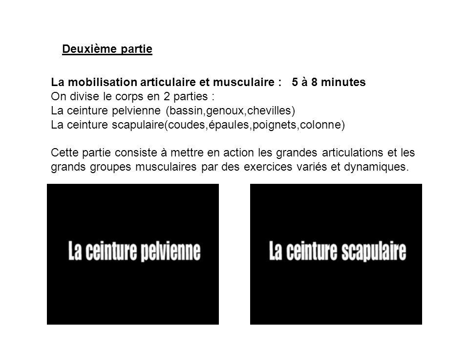 La mobilisation articulaire et musculaire : 5 à 8 minutes On divise le corps en 2 parties : La ceinture pelvienne (bassin,genoux,chevilles) La ceintur