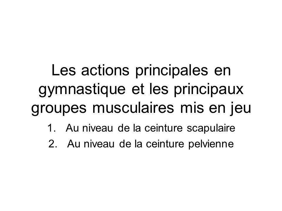 Les actions principales en gymnastique et les principaux groupes musculaires mis en jeu 1.Au niveau de la ceinture scapulaire 2.Au niveau de la ceintu