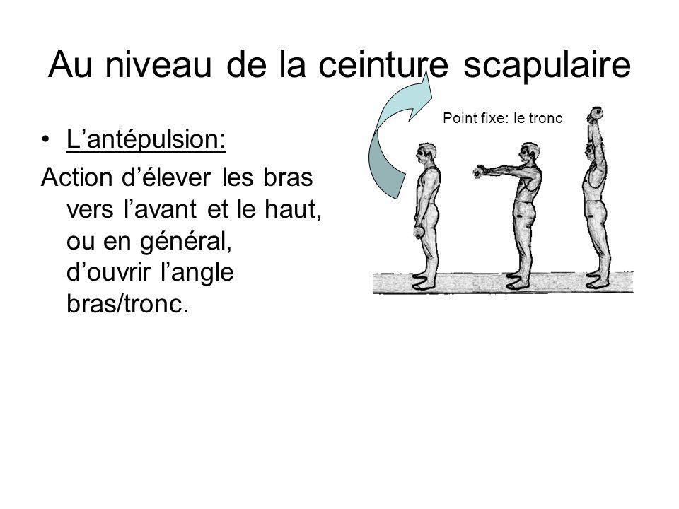 Au niveau de la ceinture scapulaire Lantépulsion: Action délever les bras vers lavant et le haut, ou en général, douvrir langle bras/tronc. Point fixe