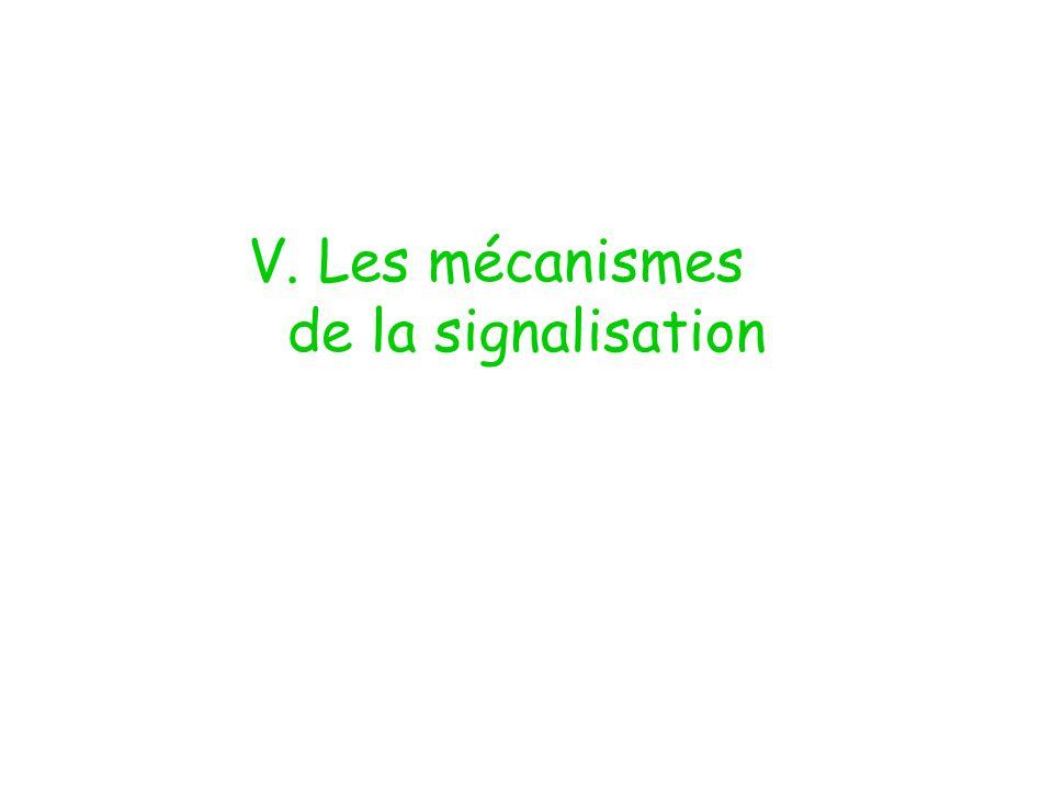 V. Les mécanismes de la signalisation