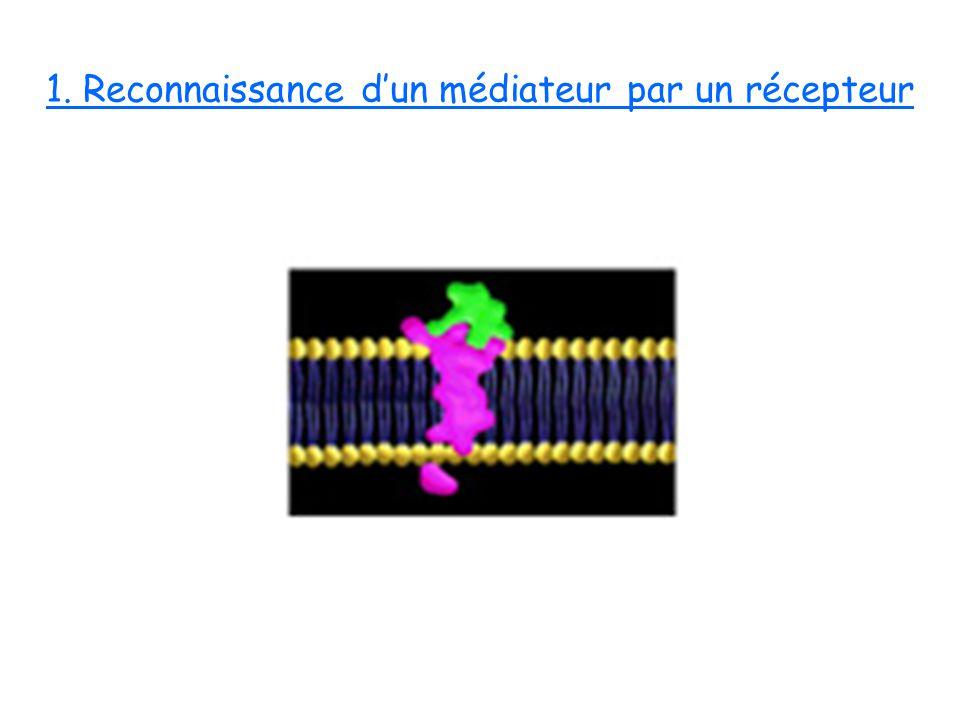1. Reconnaissance dun médiateur par un récepteur