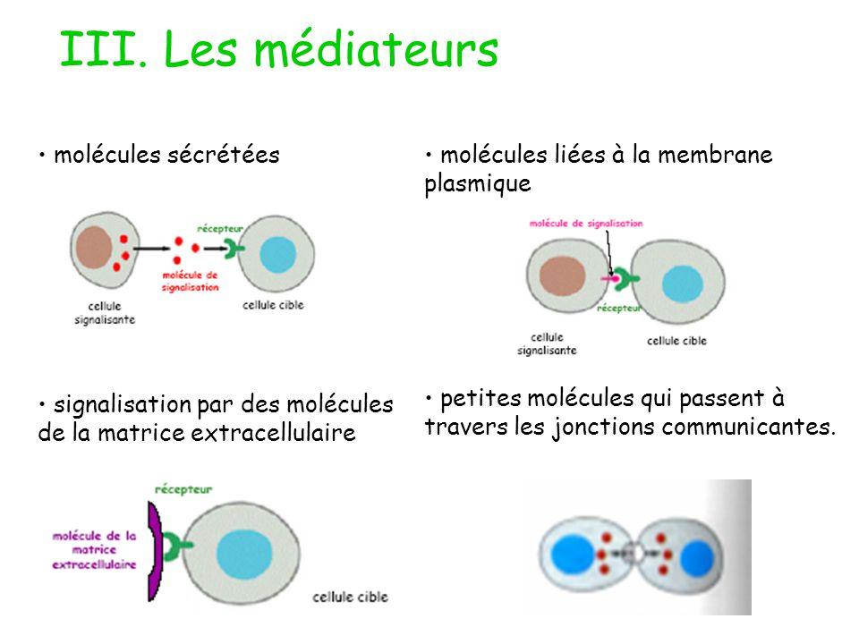 III. Les médiateurs molécules sécrétées signalisation par des molécules de la matrice extracellulaire molécules liées à la membrane plasmique petites