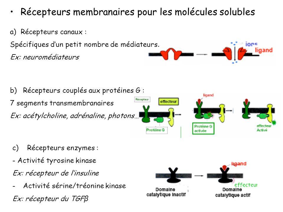 Récepteurs membranaires pour les molécules solubles c) Récepteurs enzymes : - Activité tyrosine kinase Ex: récepteur de linsuline -Activité sérine/tré