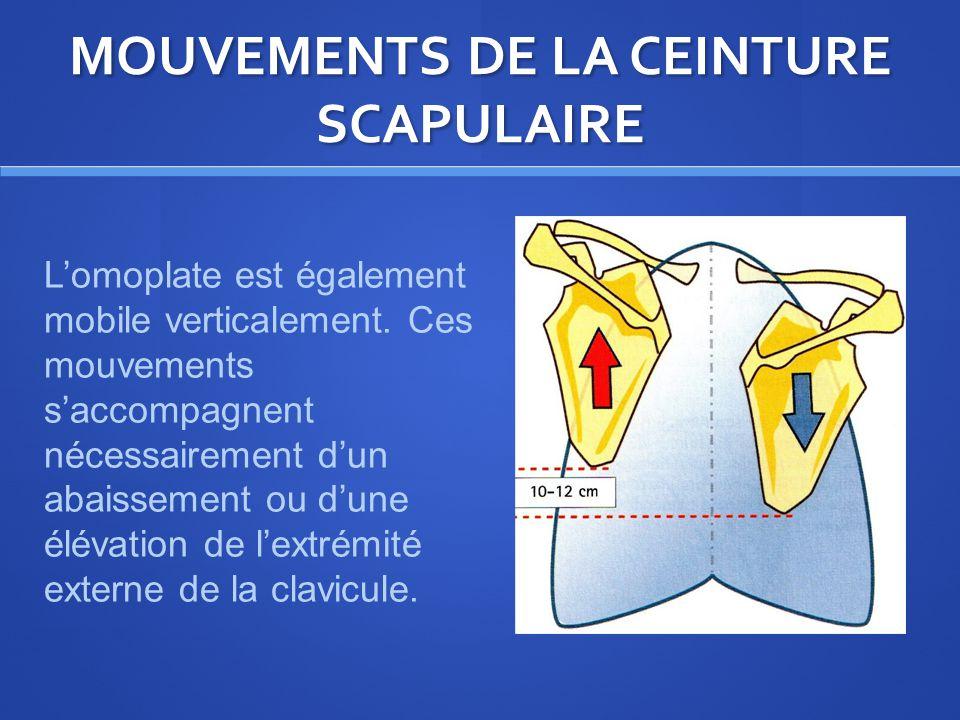 MOUVEMENTS DE LA CEINTURE SCAPULAIRE Lomoplate est également mobile verticalement.