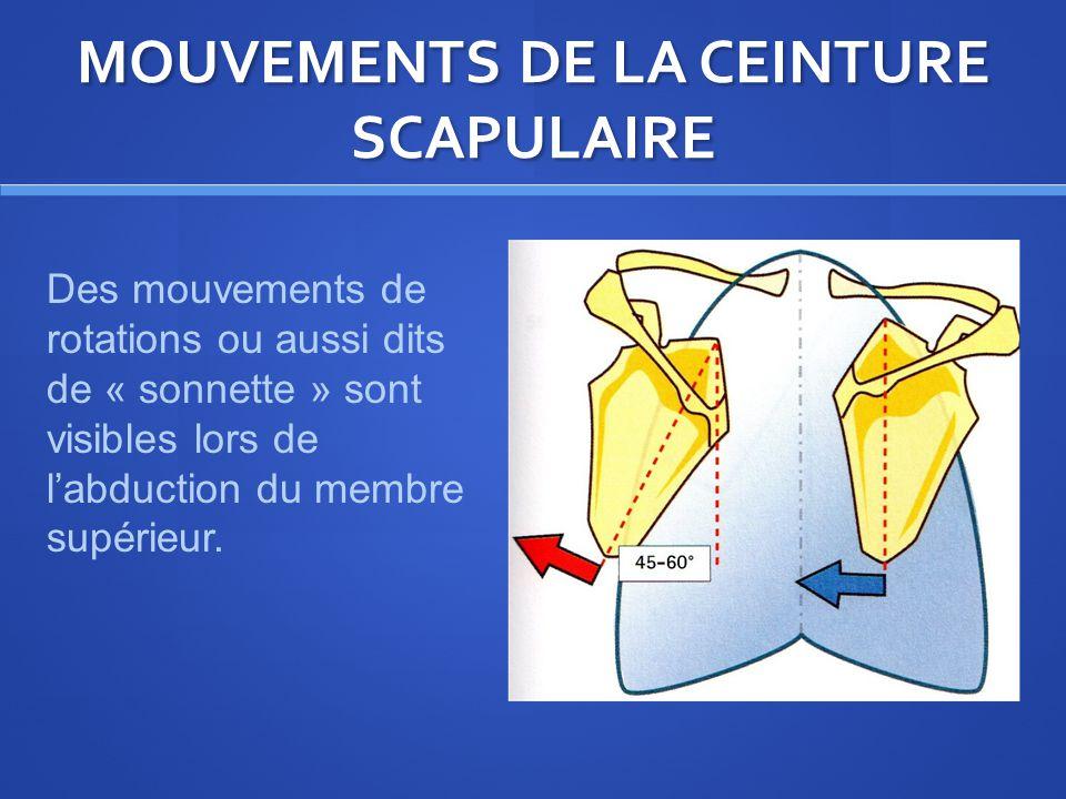 MOUVEMENTS DE LA CEINTURE SCAPULAIRE Des mouvements de rotations ou aussi dits de « sonnette » sont visibles lors de labduction du membre supérieur.