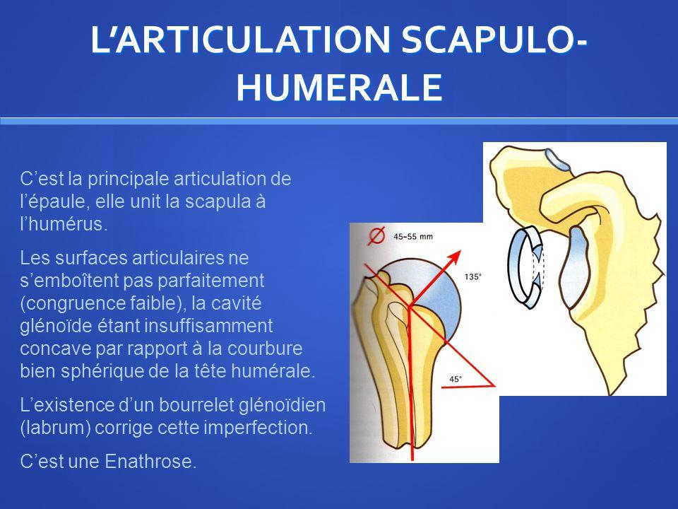 LARTICULATION SCAPULO- HUMERALE Cest la principale articulation de lépaule, elle unit la scapula à lhumérus.