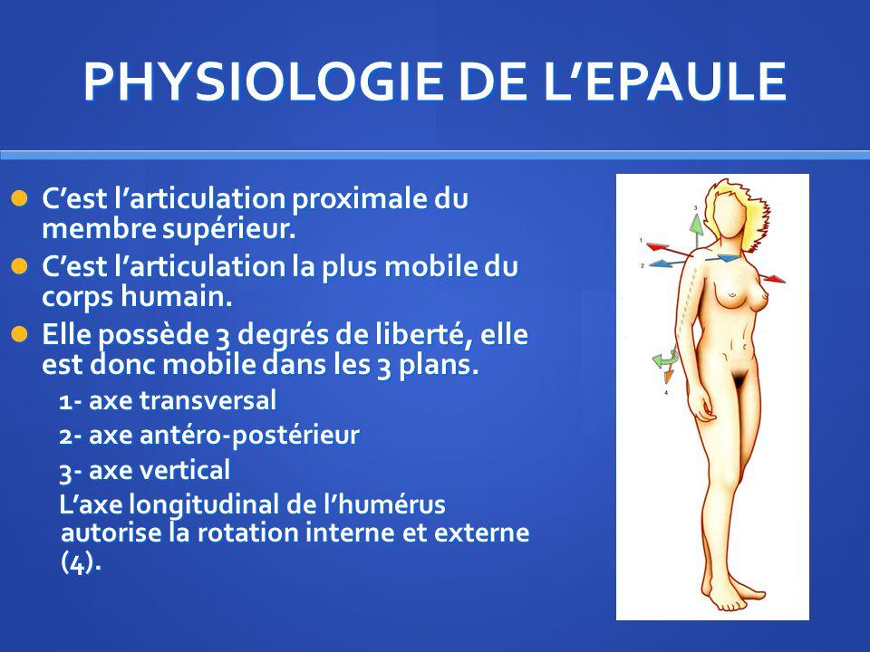 PHYSIOLOGIE DE LEPAULE Cest larticulation proximale du membre supérieur.