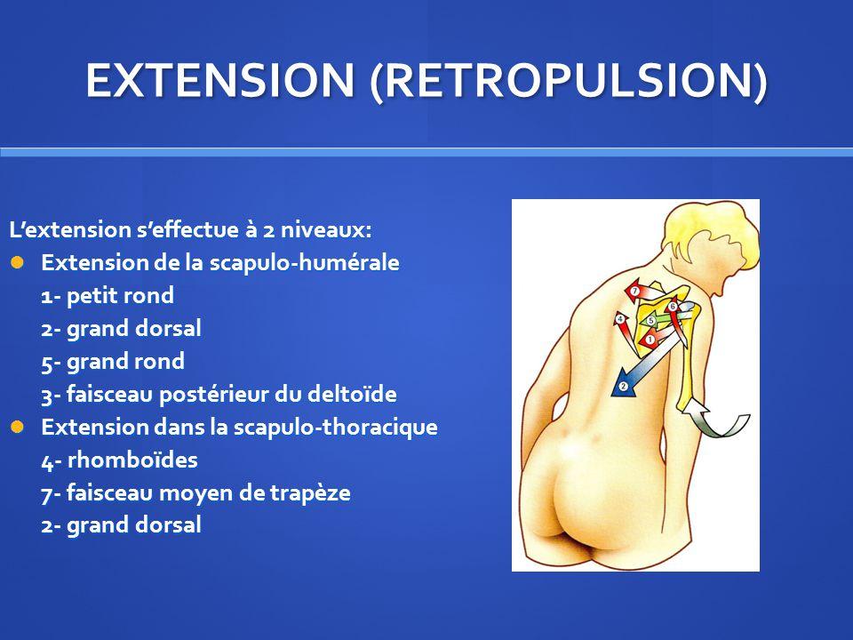 EXTENSION (RETROPULSION) Lextension seffectue à 2 niveaux: Extension de la scapulo-humérale Extension de la scapulo-humérale 1- petit rond 2- grand dorsal 5- grand rond 3- faisceau postérieur du deltoïde Extension dans la scapulo-thoracique Extension dans la scapulo-thoracique 4- rhomboïdes 7- faisceau moyen de trapèze 2- grand dorsal