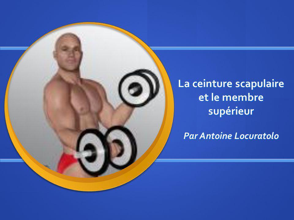 La ceinture scapulaire et le membre supérieur Par Antoine Locuratolo