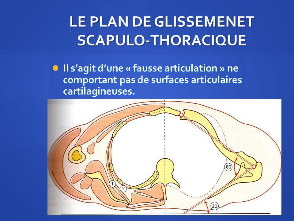 LE PLAN DE GLISSEMENET SCAPULO-THORACIQUE Il sagit dune « fausse articulation » ne comportant pas de surfaces articulaires cartilagineuses. Il sagit d