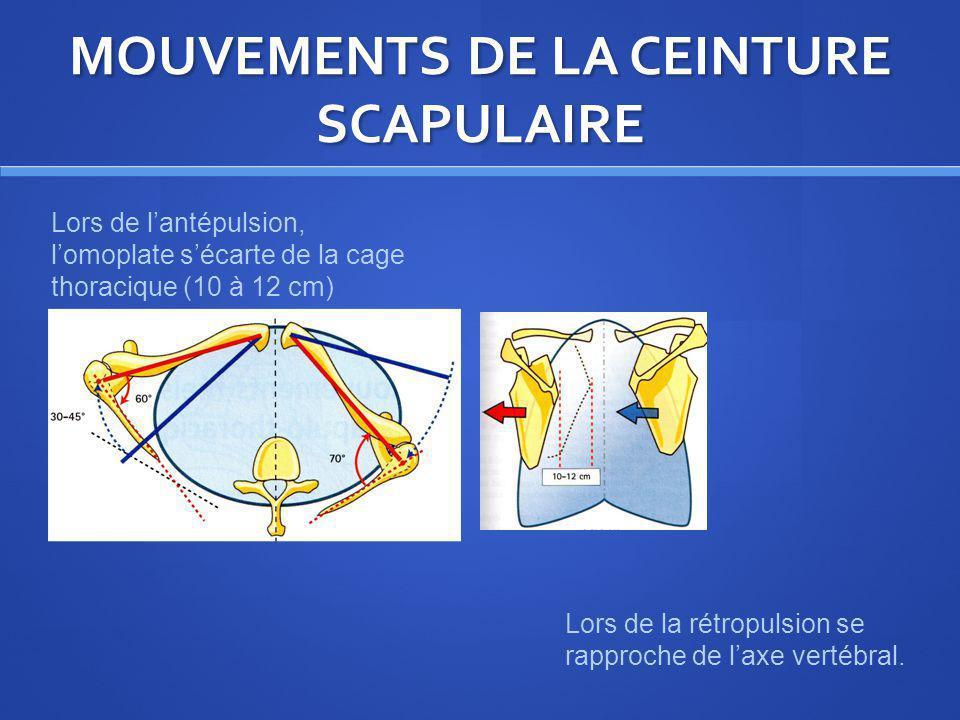 MOUVEMENTS DE LA CEINTURE SCAPULAIRE Lors de lantépulsion, lomoplate sécarte de la cage thoracique (10 à 12 cm) Lors de la rétropulsion se rapproche d