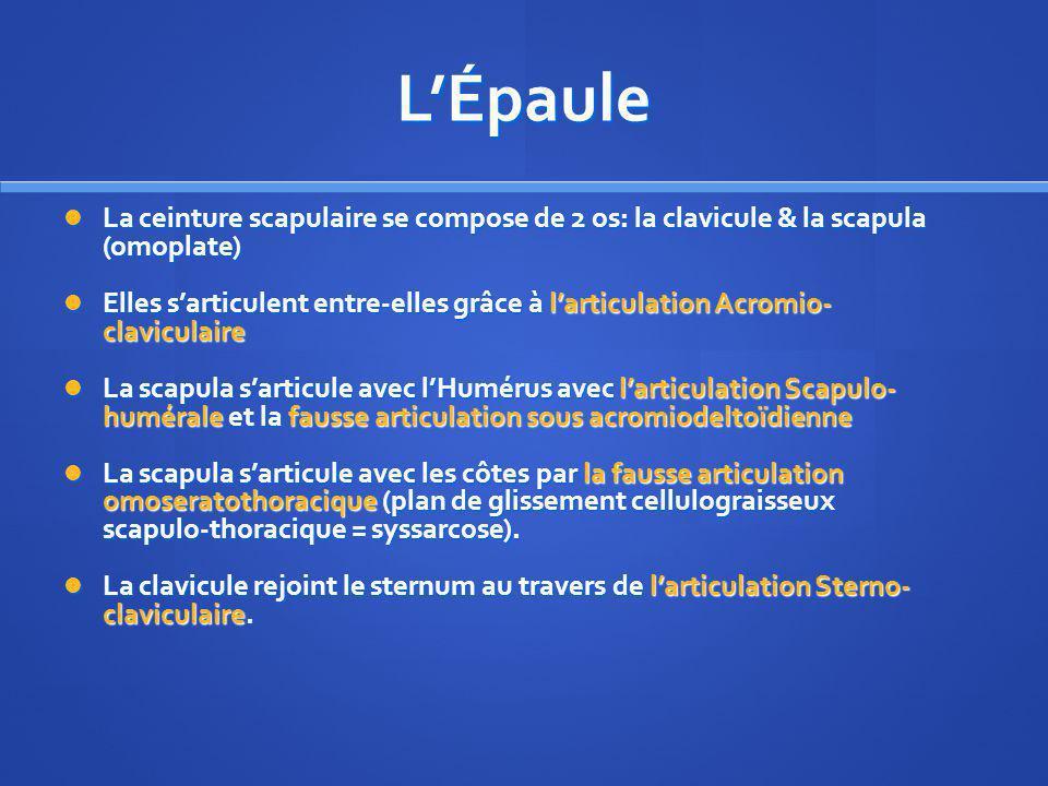 SCAPULA ET CLAVICULE SCAPULA (OMOPLATE)CLAVICULE