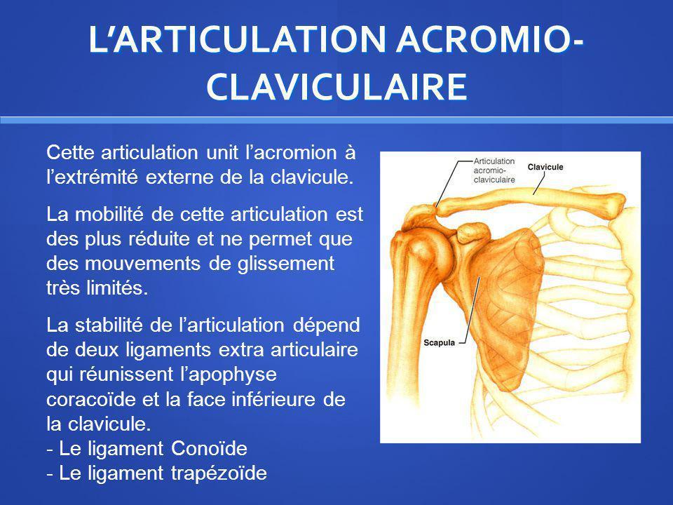 LARTICULATION ACROMIO- CLAVICULAIRE Cette articulation unit lacromion à lextrémité externe de la clavicule. La mobilité de cette articulation est des
