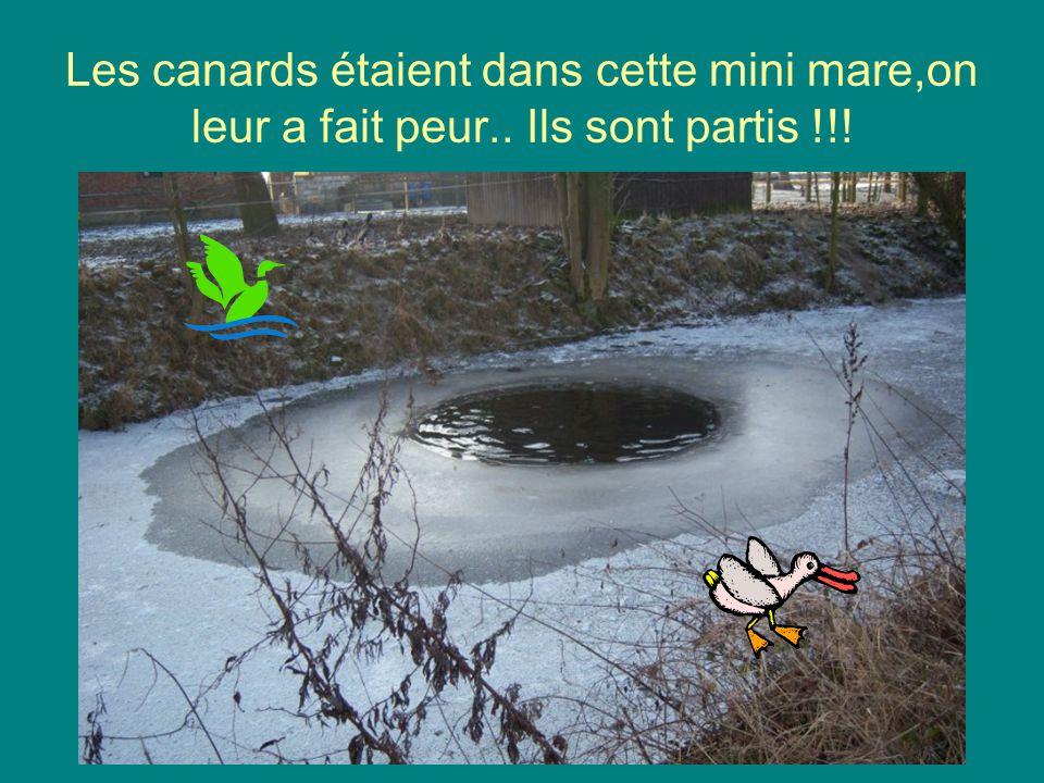 Le canal est désert… pas un canard !!!