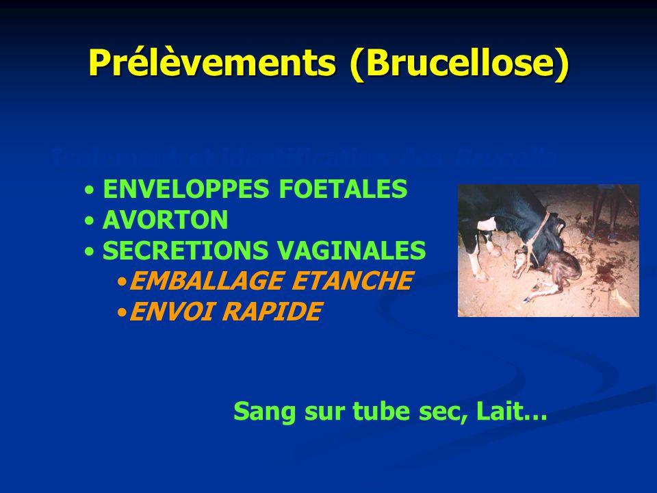 Prélèvements (FA) SUR LE VIVANT DE LANIMAL - Lymphe daphte - Lambeau épithélial