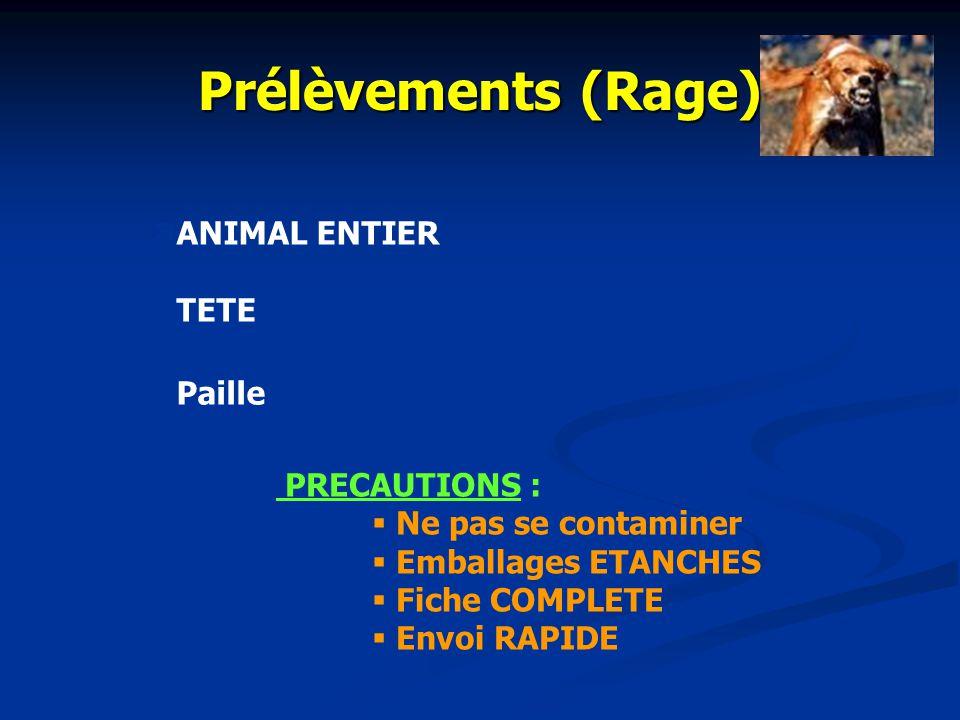 Prélèvements (Brucellose) Isolement et identification des Brucella ENVELOPPES FOETALES AVORTON SECRETIONS VAGINALES EMBALLAGE ETANCHE ENVOI RAPIDE Tes