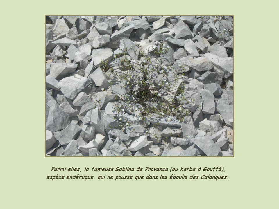 Et des plantes adaptées au sol et au climat…