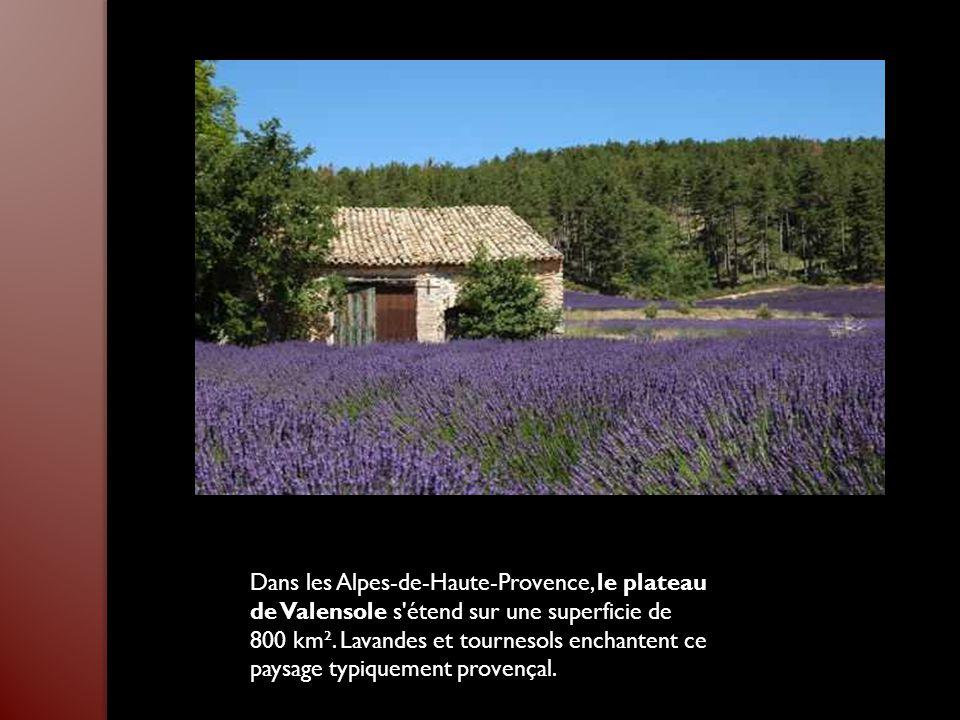 Dans les Alpes-de-Haute-Provence, le plateau de Valensole s étend sur une superficie de 800 km².
