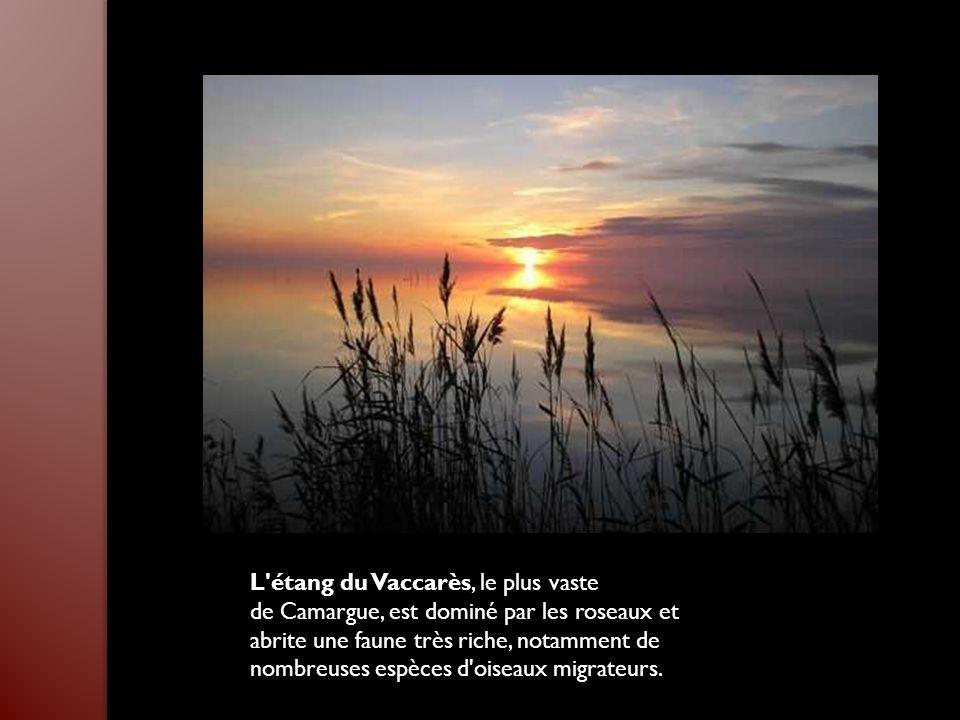 À 30 km au nord d'Avignon, Orange est une ville de presque 30 000 habitants qui a connu sa période la plus faste dans l'Antiquité, avec la domination