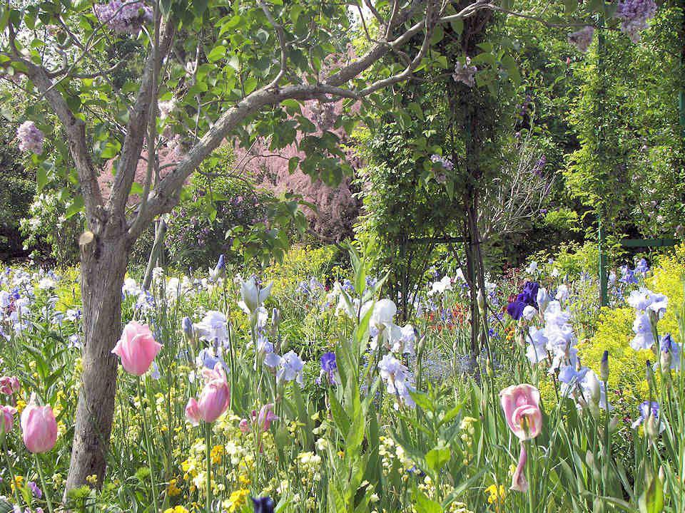 Il est très connu que Claude Monet avait une véritable passion pour les fleurs mais en particulier pour les iris et les nymphéas. Dans son jardin qui