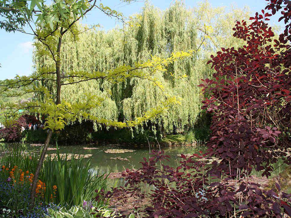 En détournant artificiellement un bras de lEpte, Claude Monet alimentait son bassin dans lequel il fit pousser ses premiers nymphéas. Les Givernois, à