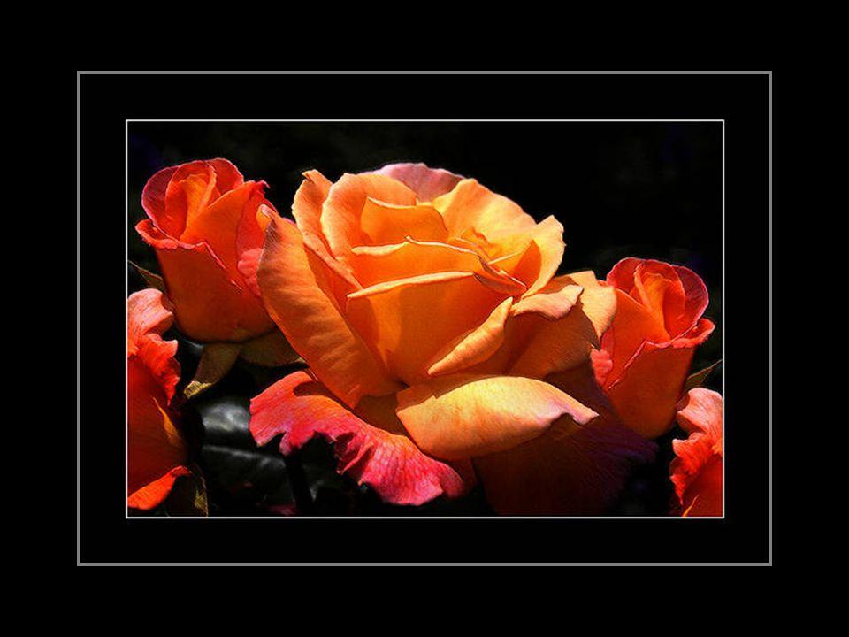 La bonté du coeur se reflète dans la beauté de nos yeux...