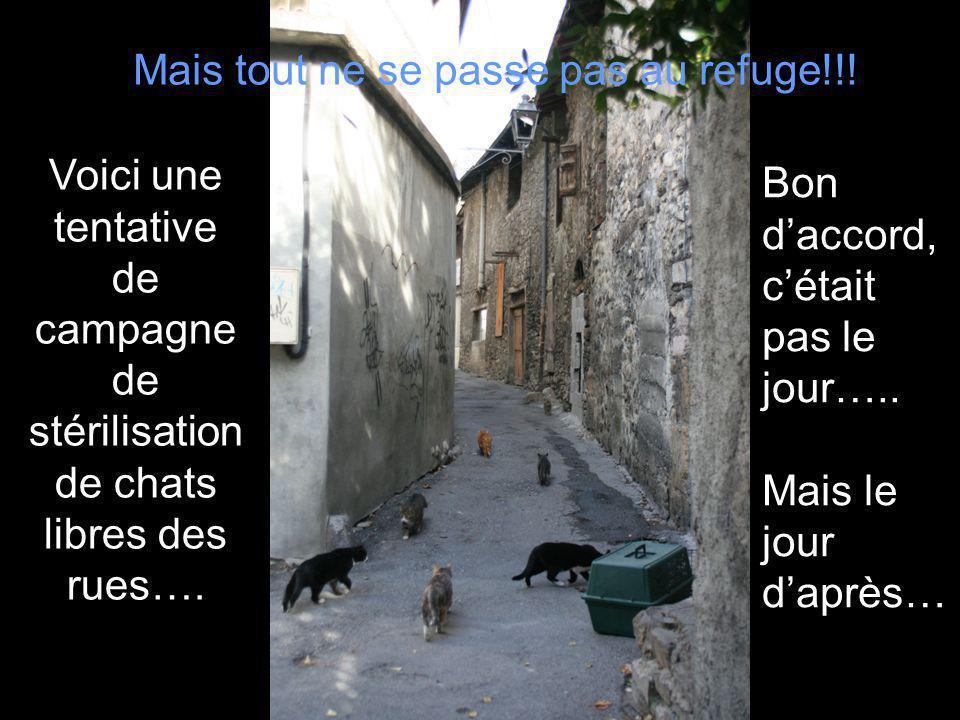Mais tout ne se passe pas au refuge!!! Voici une tentative de campagne de stérilisation de chats libres des rues…. Bon daccord, cétait pas le jour…..