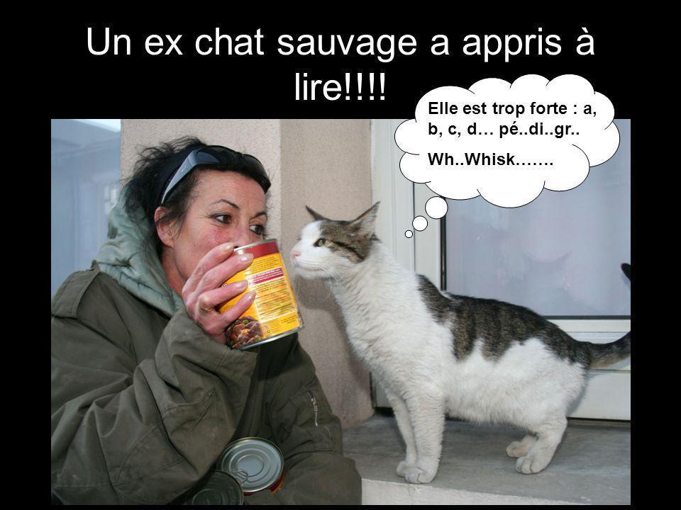 Un ex chat sauvage a appris à lire!!!! Elle est trop forte : a, b, c, d… pé..di..gr.. Wh..Whisk…….