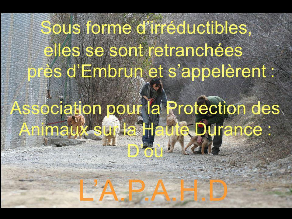 Sous forme dirréductibles, elles se sont retranchées près dEmbrun et sappelèrent : Association pour la Protection des Animaux sur la Haute Durance : Doù LA.P.A.H.D