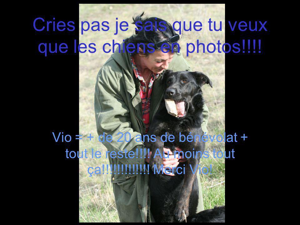 Cries pas je sais que tu veux que les chiens en photos!!!! Vio = + de 20 ans de bénévolat + tout le reste!!!! Au moins tout ça!!!!!!!!!!!!! Merci Vio!