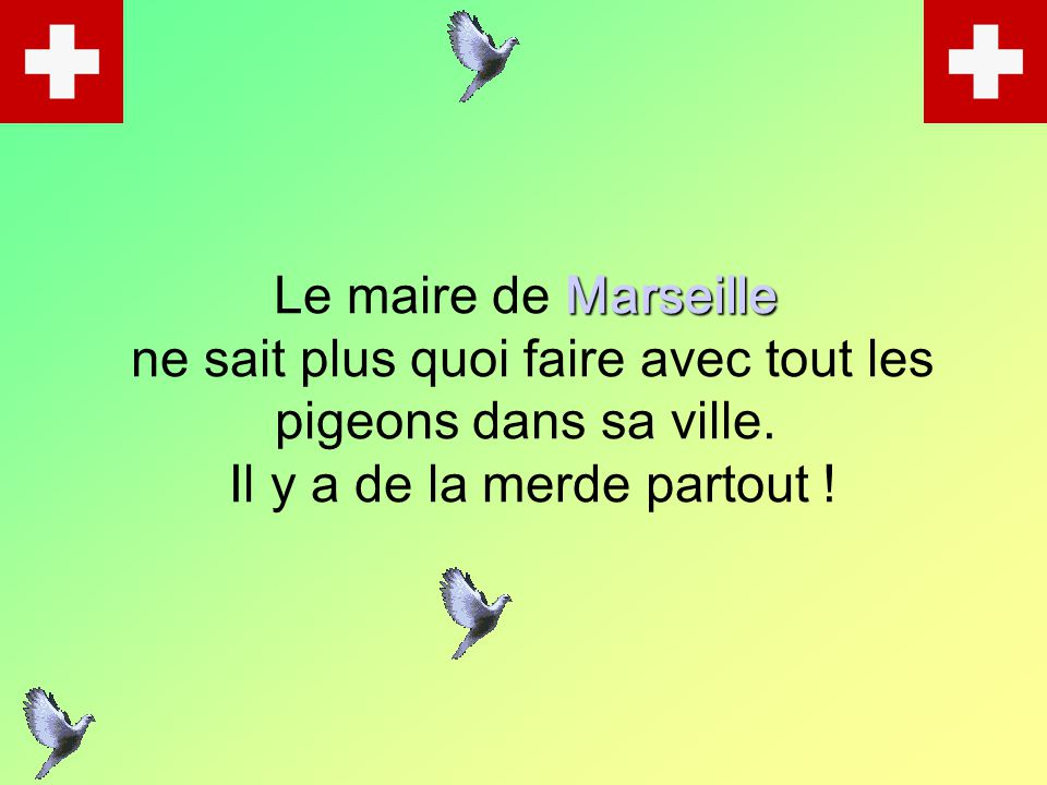 Le maire de M MM Marseille ne sait plus quoi faire avec tout les pigeons dans sa ville. Il y a de la merde partout !