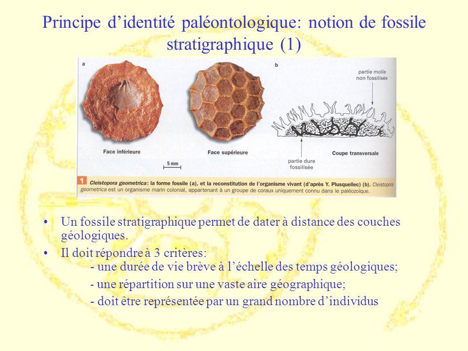 Principe didentité paléontologique: notion de fossile stratigraphique (1) Un fossile stratigraphique permet de dater à distance des couches géologique