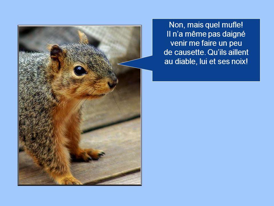 Ah! Et puis zut! Ce nest pas la Roussette qui mintéresse, mais quelques bonnes noix à croquer!