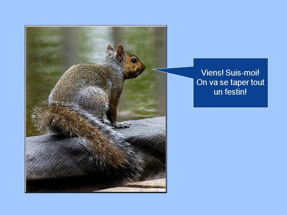 Hé! Par ici! Jai trouvé un tas de noix! Des noix énormes! Grosses comme ça!