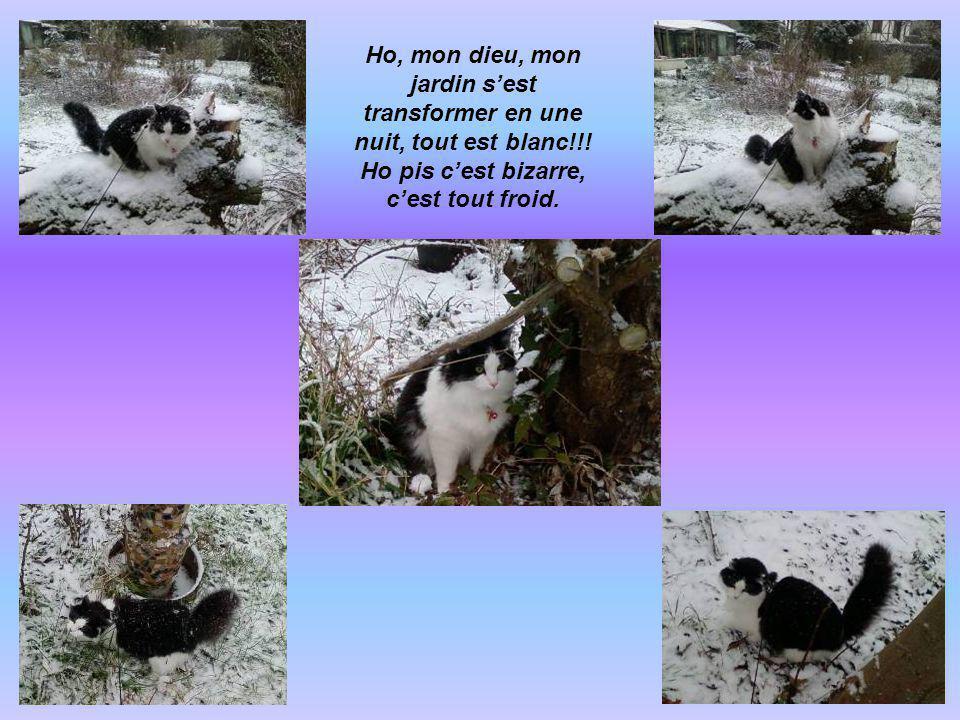 Bon bah voilà mes aventures, maintenant il est lheure pour moi daller me coucher, dure dure la vie de chat… ALLEZ, CHALUT!!!