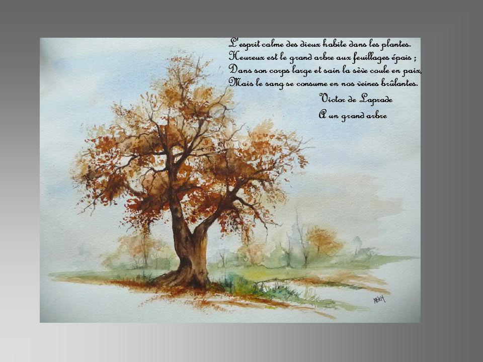 L'esprit calme des dieux habite dans les plantes. Heureux est le grand arbre aux feuillages épais ; Dans son corps large et sain la sève coule en paix