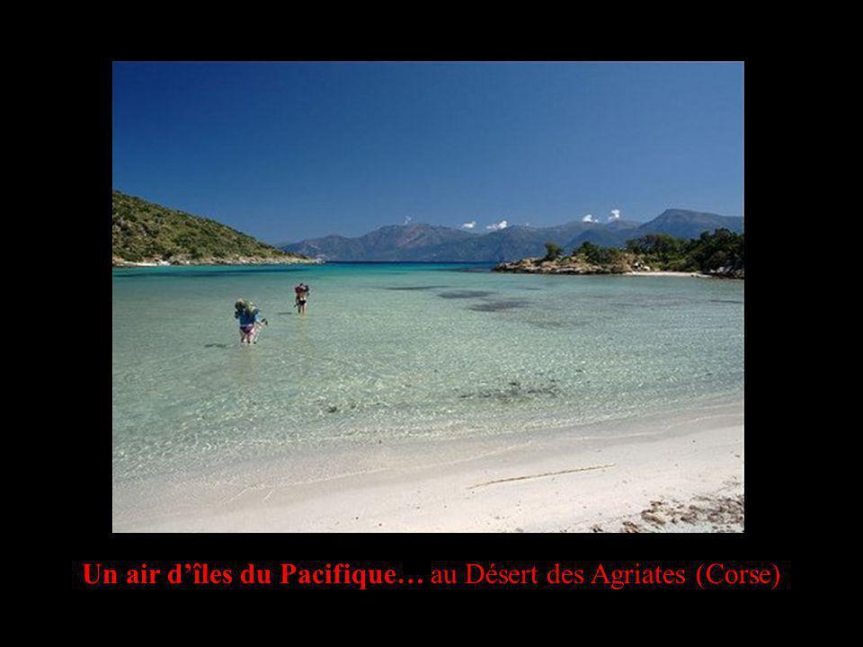 Un air dîles du Pacifique… au Désert des Agriates (Corse)