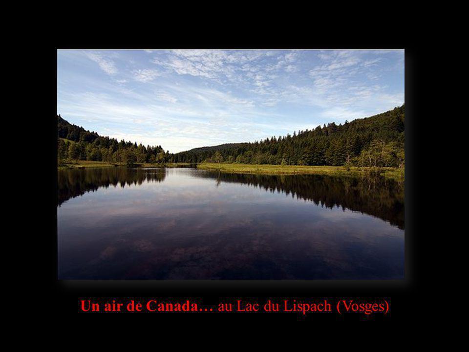 Un air de Canada… au Lac du Lispach (Vosges)