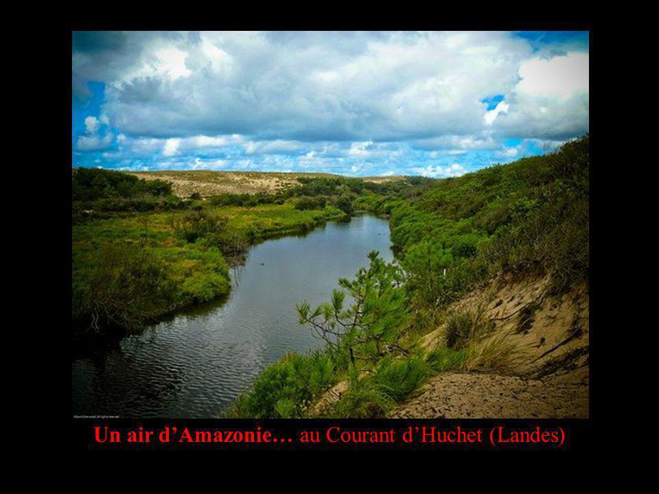Un air dAmazonie… au Courant dHuchet (Landes)