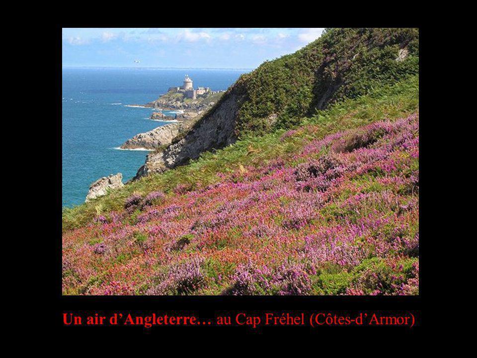 Un air dAngleterre… au Cap Fréhel (Côtes-dArmor)