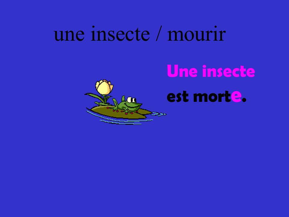 une insecte / mourir Une insecte est mort e.