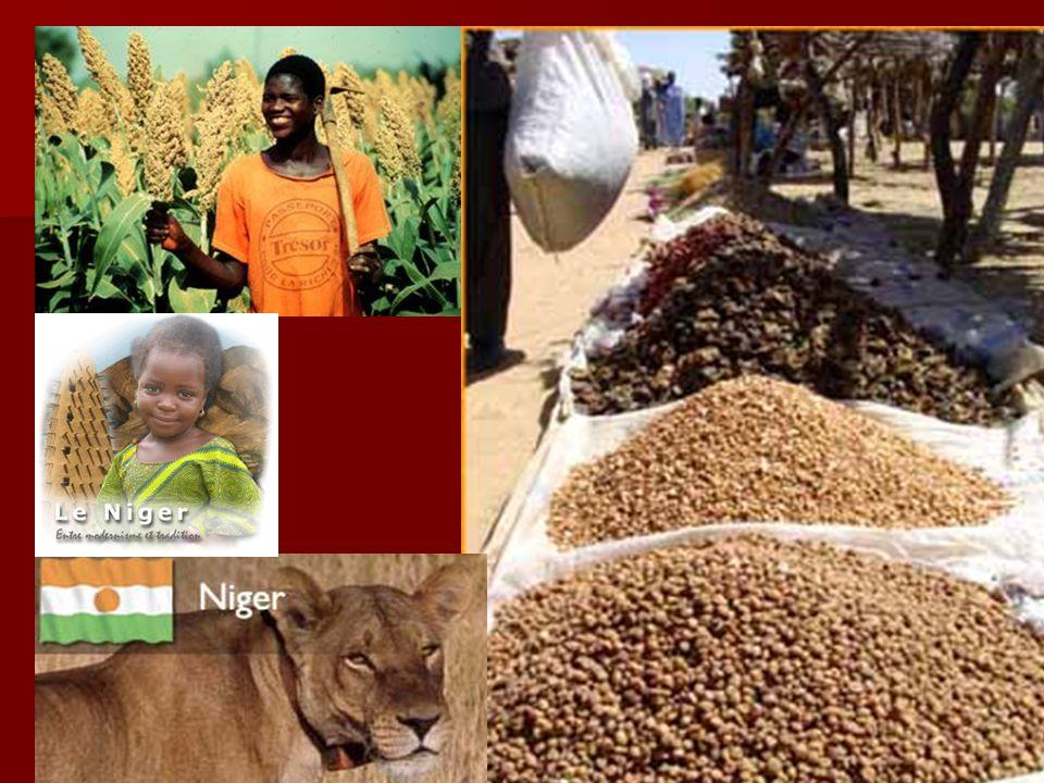 Niger – des faits importants La capitale : Niamey La capitale : Niamey La superficie: 1.267.000 km 2 La superficie: 1.267.000 km 2 La population : 12.525.094 habitants La population : 12.525.094 habitants Le taux de fertilité : 7.46 enfants/femme Le taux de fertilité : 7.46 enfants/femme les groupes ethniques: Hausa 56%, Djerma 22%, Fula 8.5%, Tuareg 8%, Beri Beri (Kanouri) 4.3%, Arab, Toubou, et Gourmantche 1.2%, presque 1,200 étrangers français les groupes ethniques: Hausa 56%, Djerma 22%, Fula 8.5%, Tuareg 8%, Beri Beri (Kanouri) 4.3%, Arab, Toubou, et Gourmantche 1.2%, presque 1,200 étrangers français les langues: le Français,le Hausa, le Djerma les langues: le Français,le Hausa, le Djerma