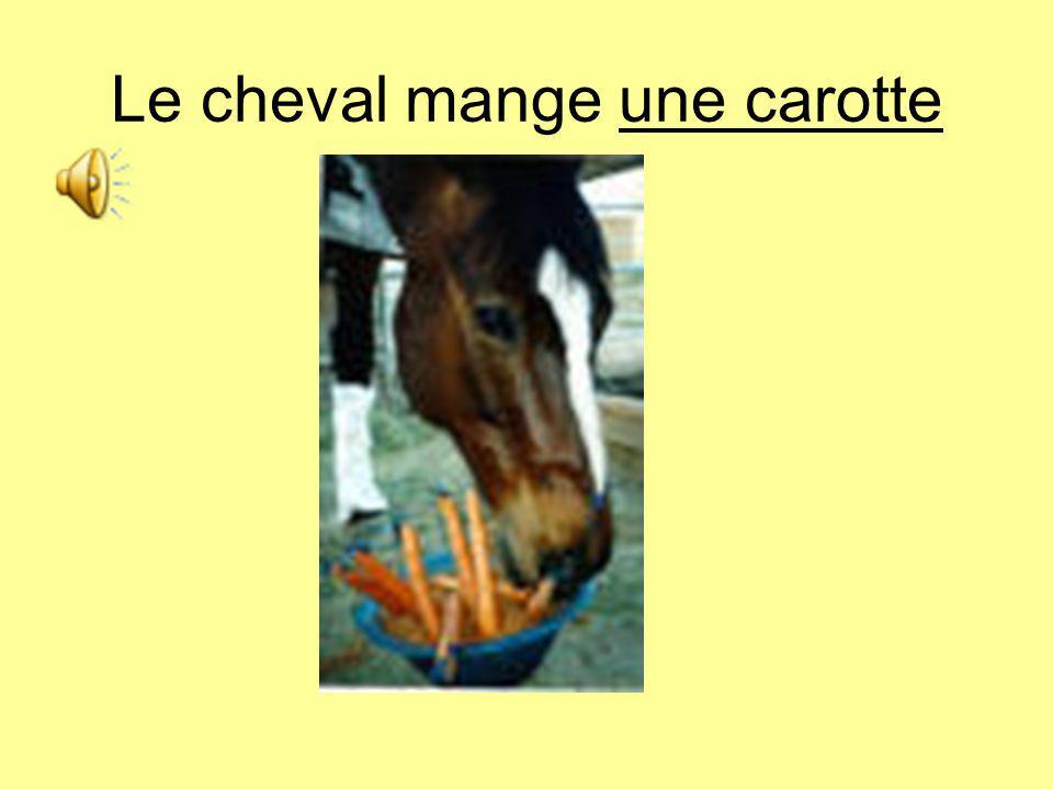 Le cheval mange une carotte