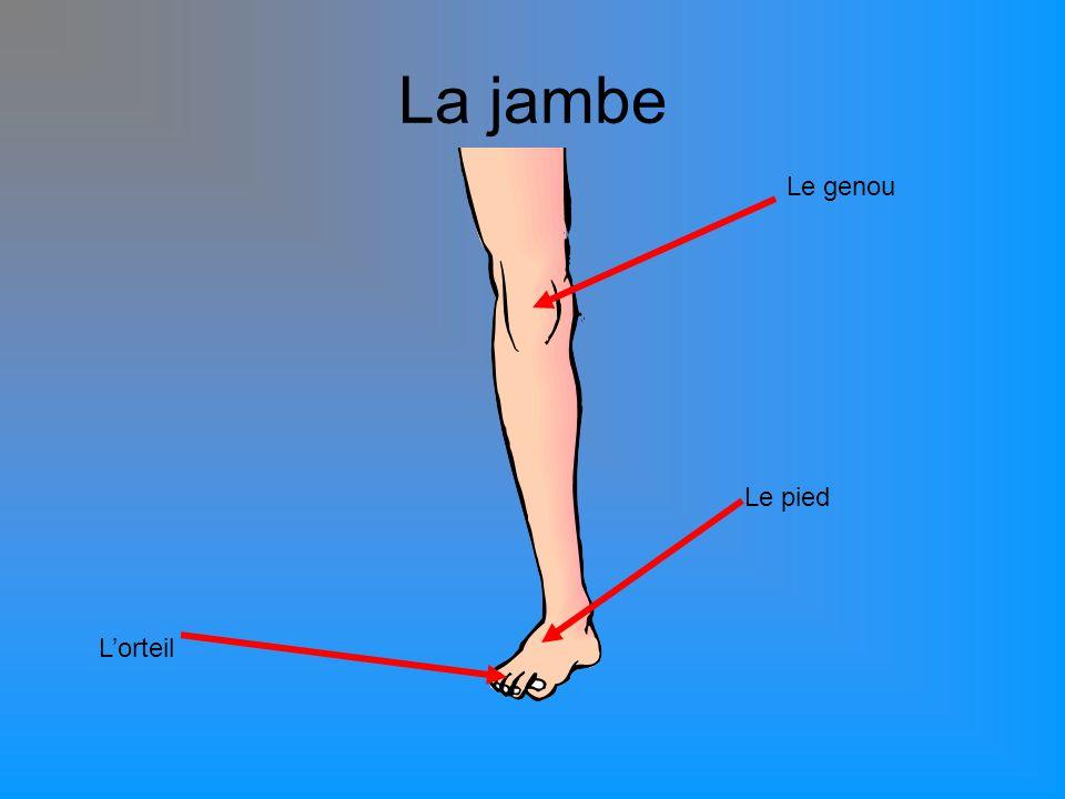 La jambe Lorteil Le genou Le pied
