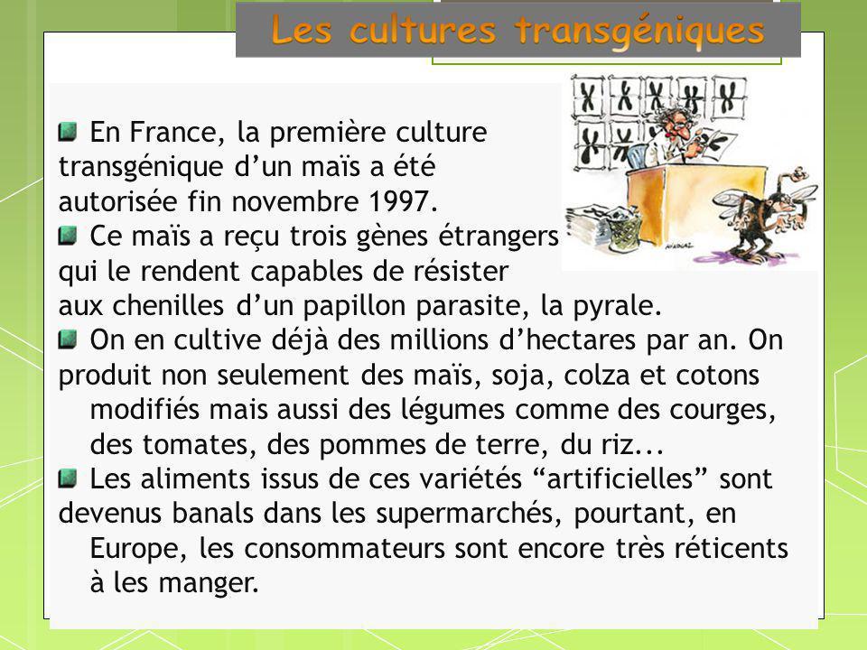En France, la première culture transgénique dun maïs a été autorisée fin novembre 1997. Ce maïs a reçu trois gènes étrangers qui le rendent capables d
