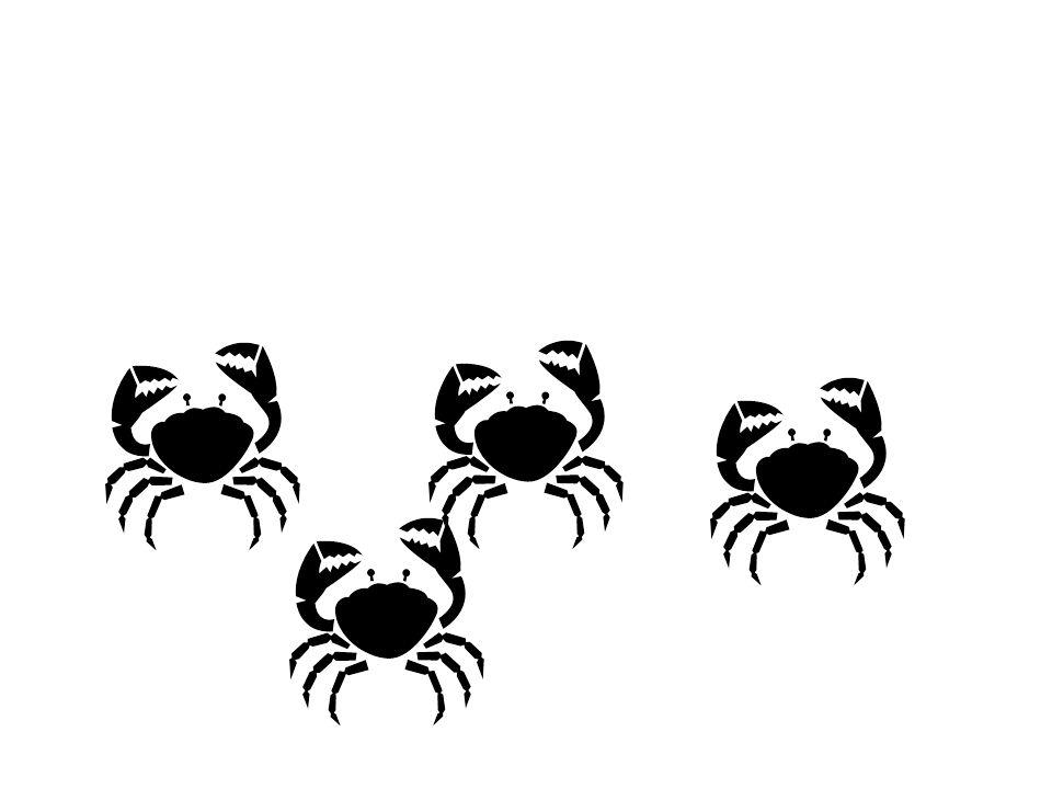 Les crabes (m.)