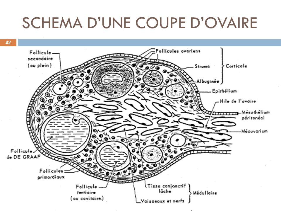 SCHEMA DUNE COUPE DOVAIRE 42