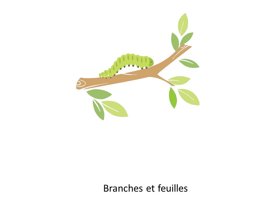Branches et feuilles